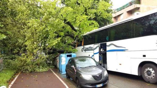 05.21 albero caduto