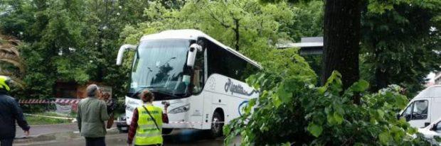 06.13 albero su bus